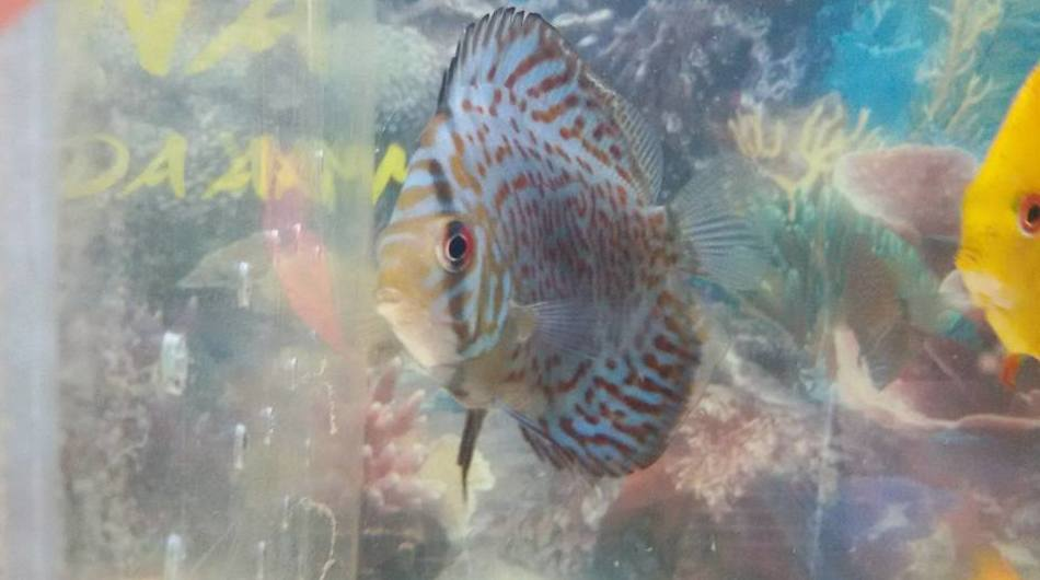 Acuarios y peces en Fuerteventura
