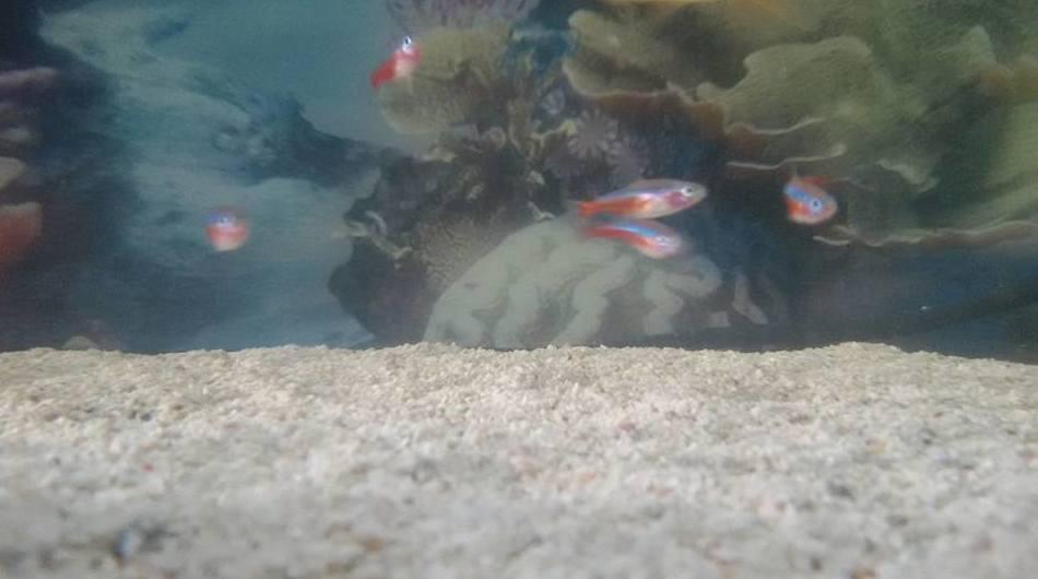 Venta de peces exóticos en Fuerteventura