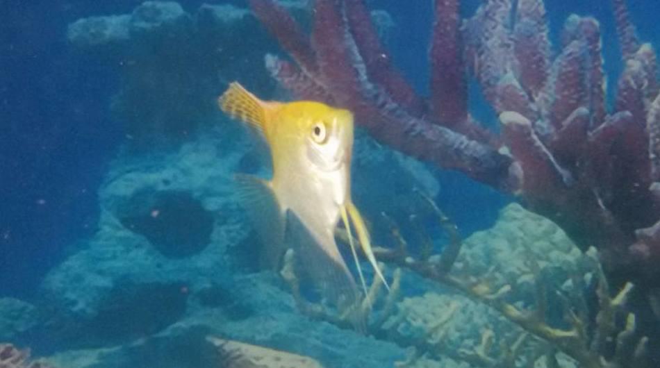 Todo tipo de peces en Fuerteventura