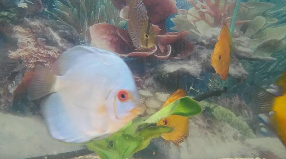 Tienda de peces en Fuerteventura