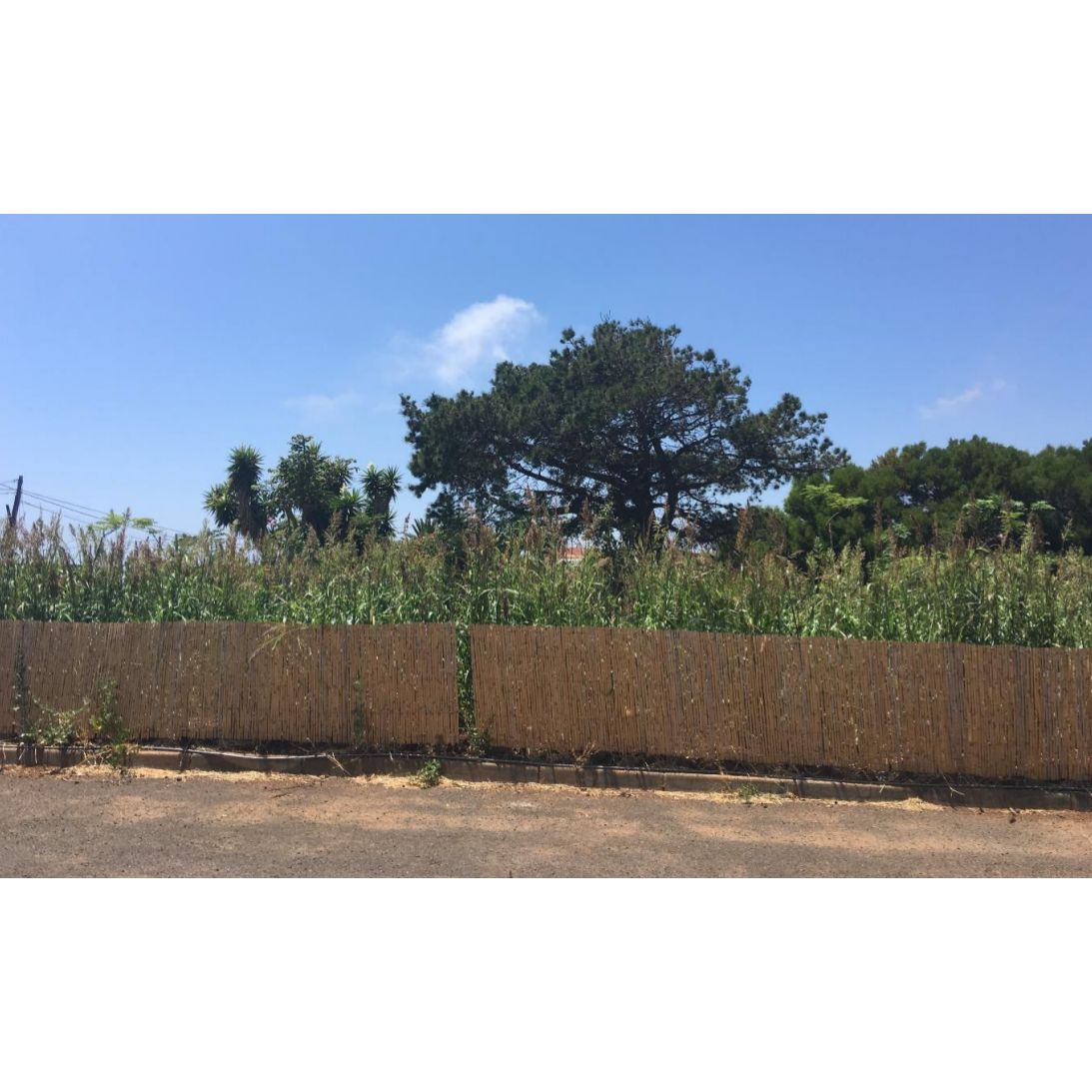 Agroaila: Proyectos y Servicios de Asociación Domitila