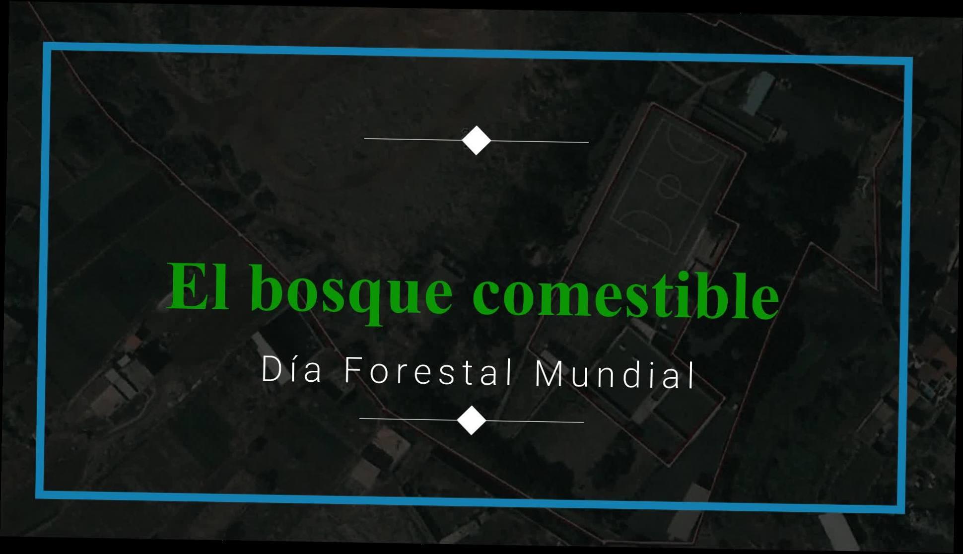 CONSTRUYENDO UN BOSQUE Y SUMIDERO DE CARBONO: Proyectos y Servicios de Asociación Domitila }}