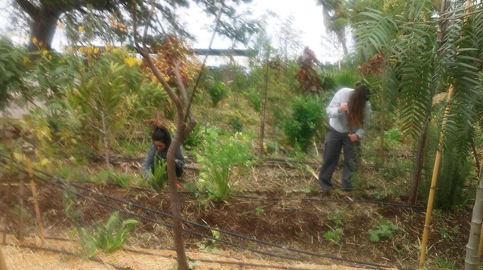 Desarrollado y estabilizado: Proyectos y Servicios de Asociación Domitila