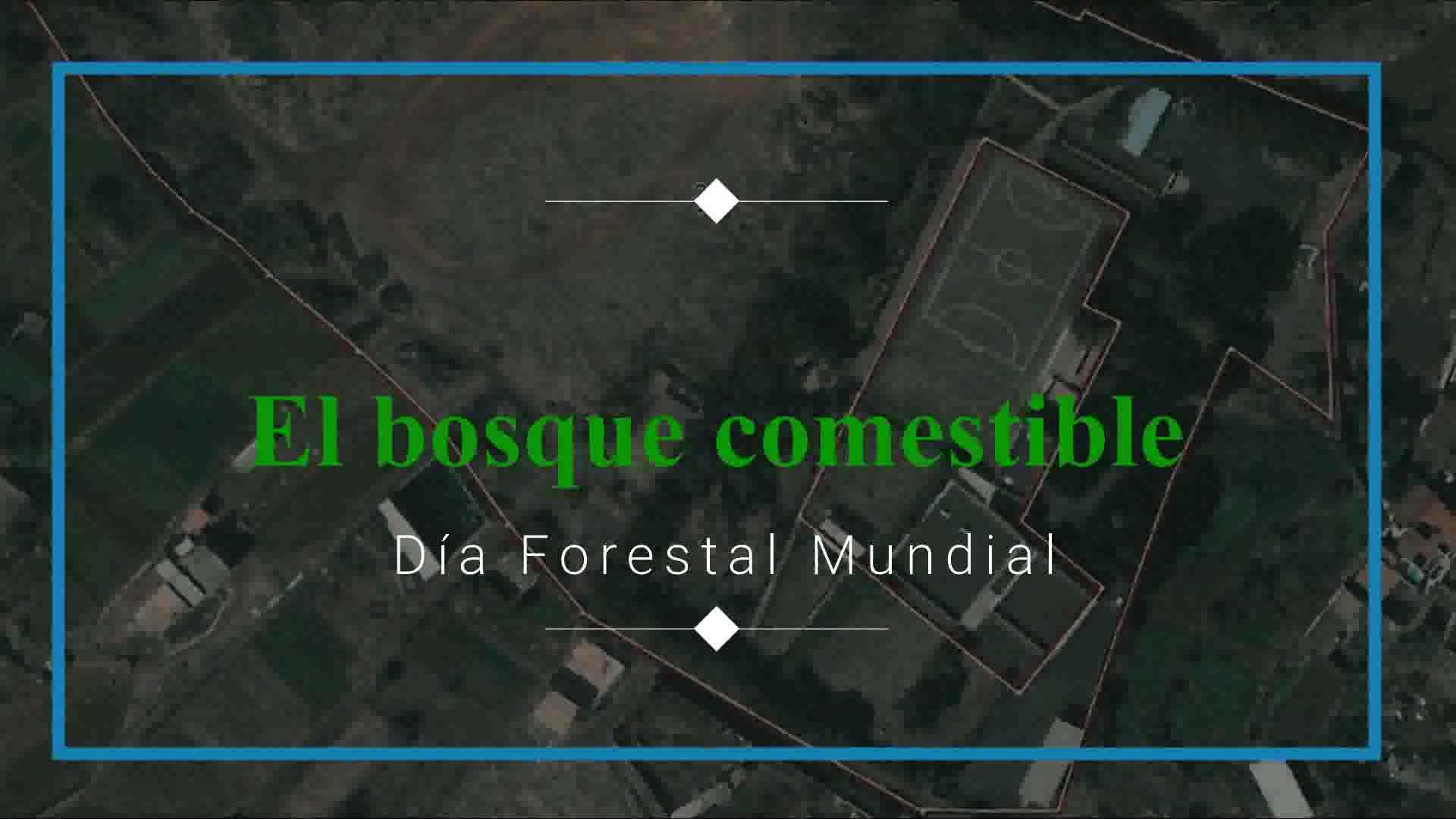 Informe 2017 del Proyecto Productivo y Cosmestible Ecooasis: Proyectos y Servicios de Asociación Domitila }}