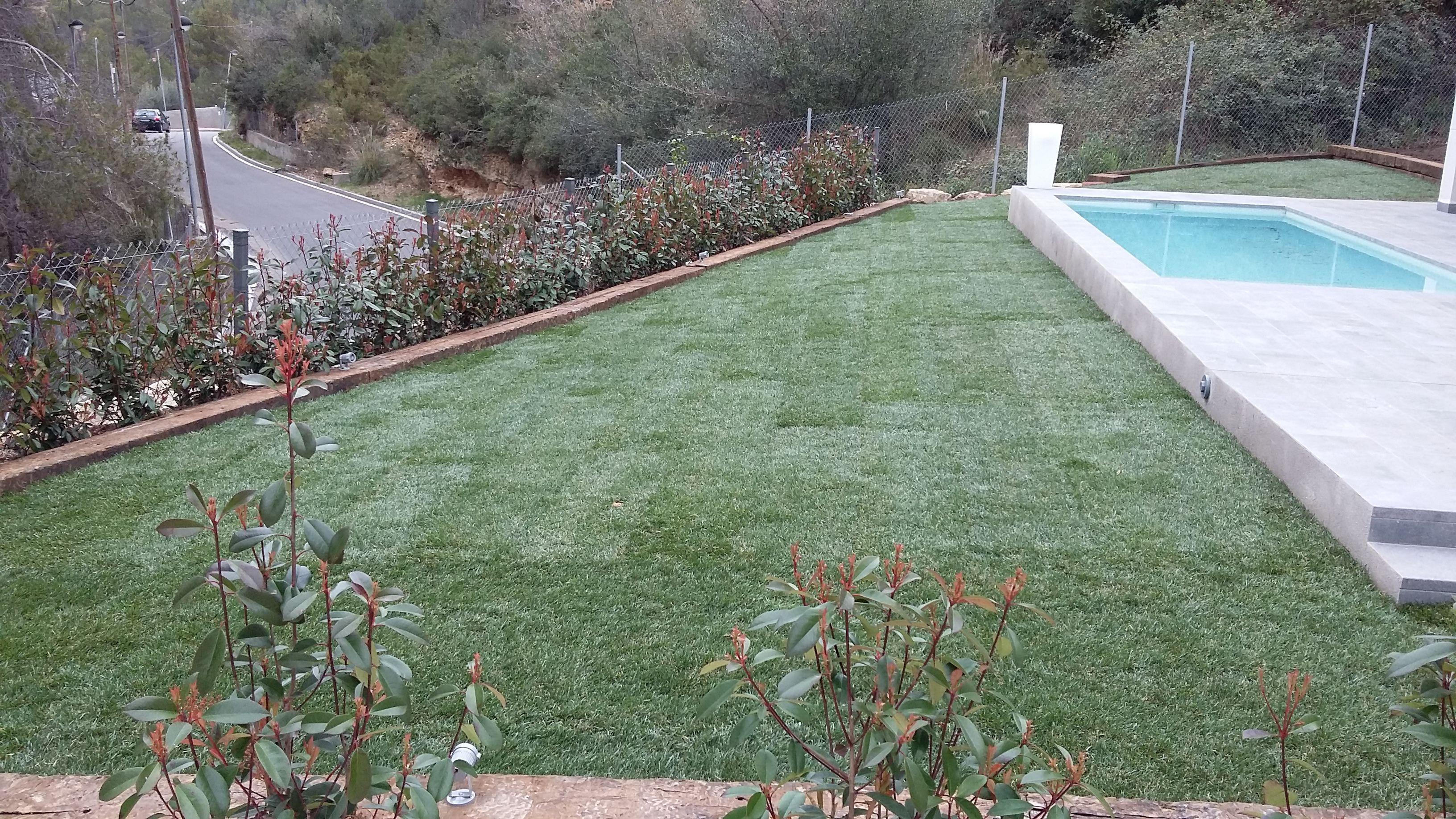 Foto 94 de Diseño y mantenimiento de jardines en Olesa de Montserrat | Jardiart
