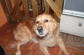 Cursos de peluquería canina en Lugo