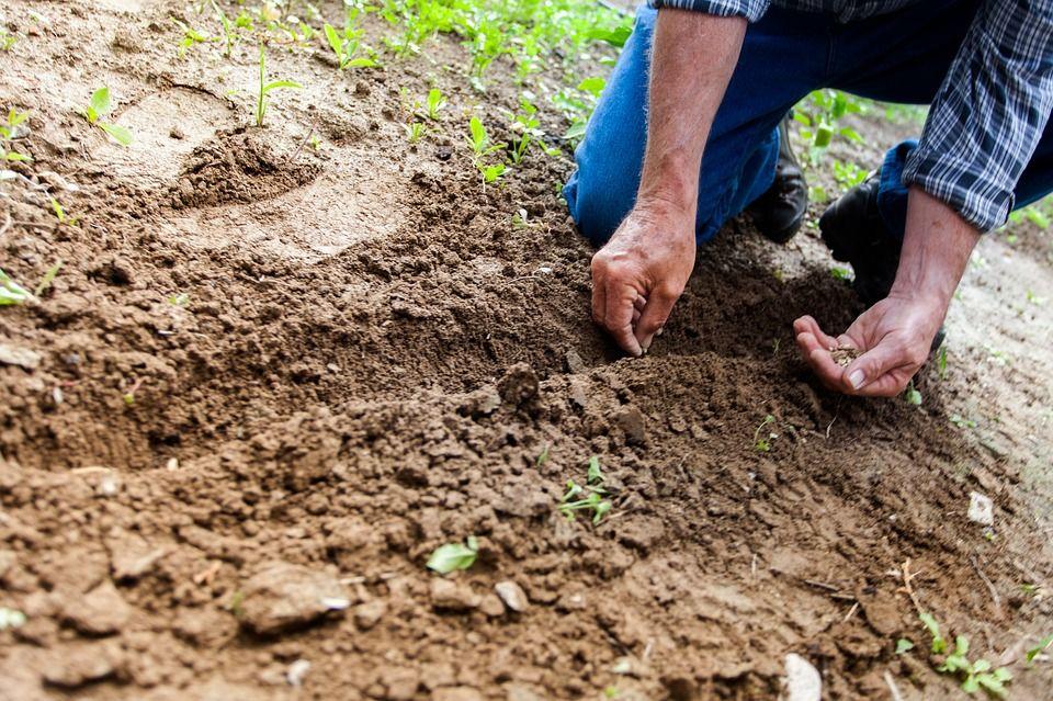 Venta de semillas: Productos y servicios de SiA Consultores Servicios Agroalimentarios