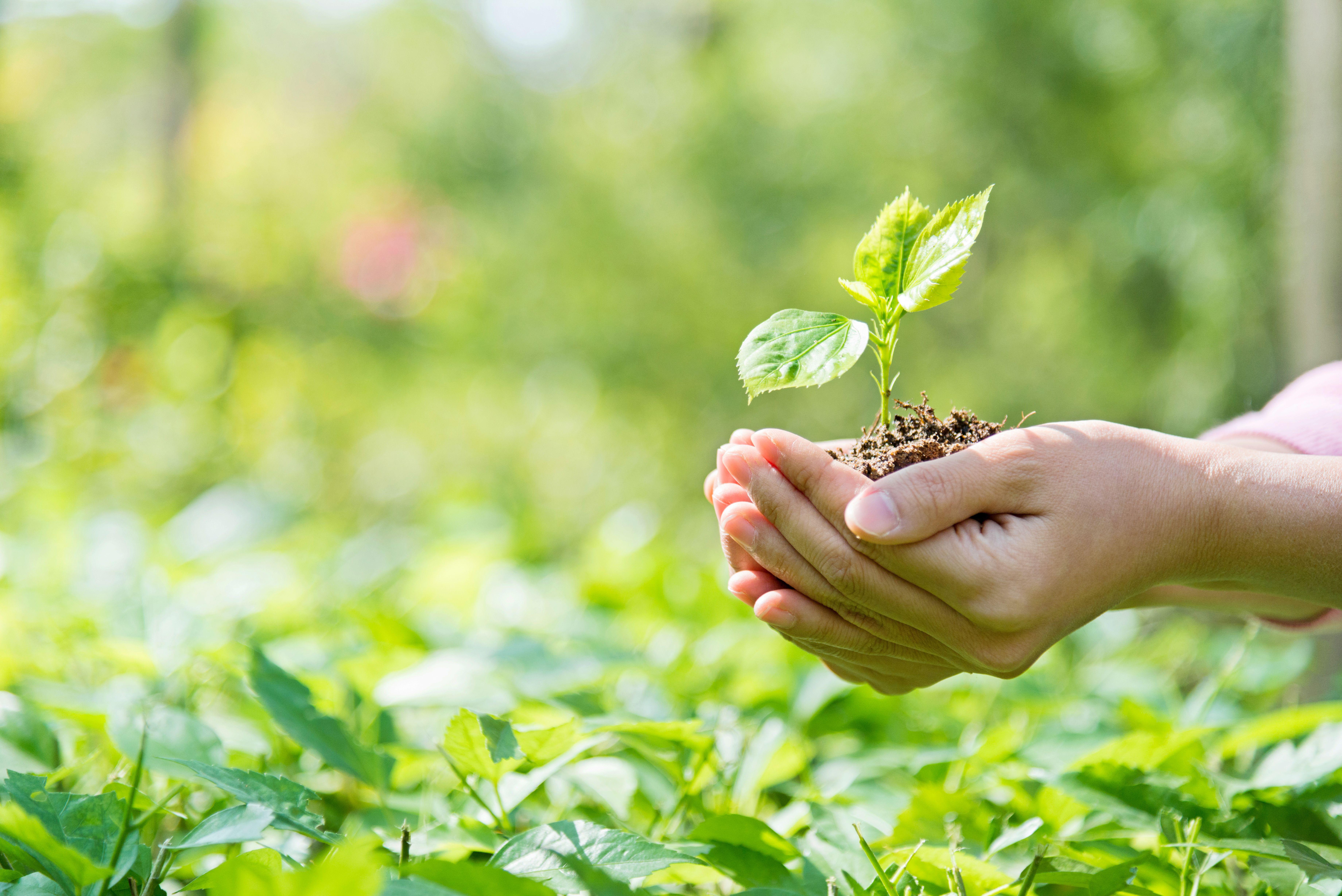 Servicios ambientales: Productos y servicios de SiA Consultores Servicios Agroalimentarios