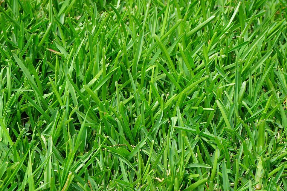 Venta de semillas de césped: Productos y servicios de SiA Consultores Servicios Agroalimentarios