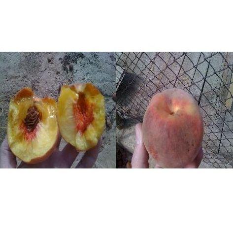 La mosca de la fruta
