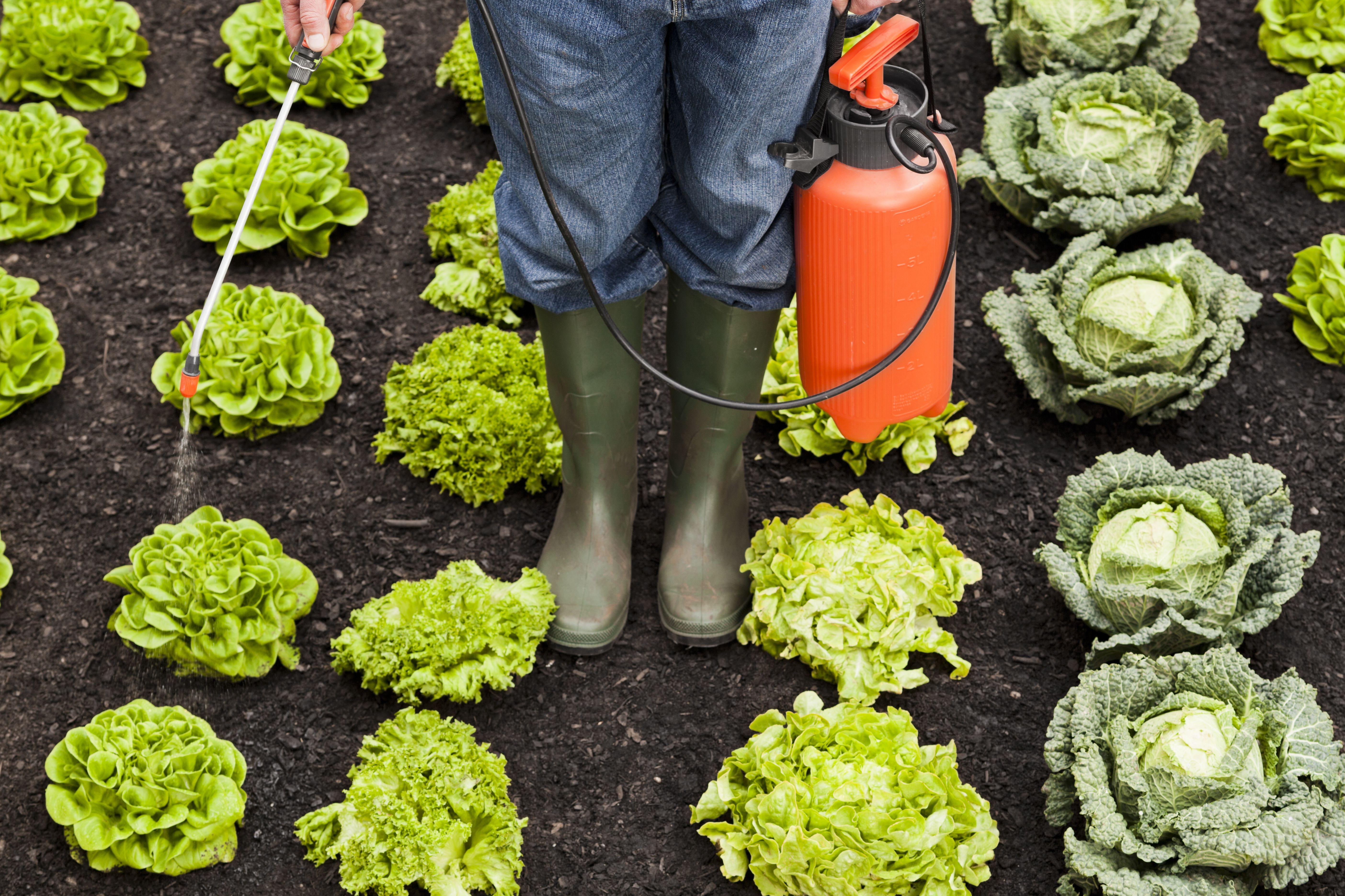 Fungicidas: Productos y servicios de SiA Consultores Servicios Agroalimentarios