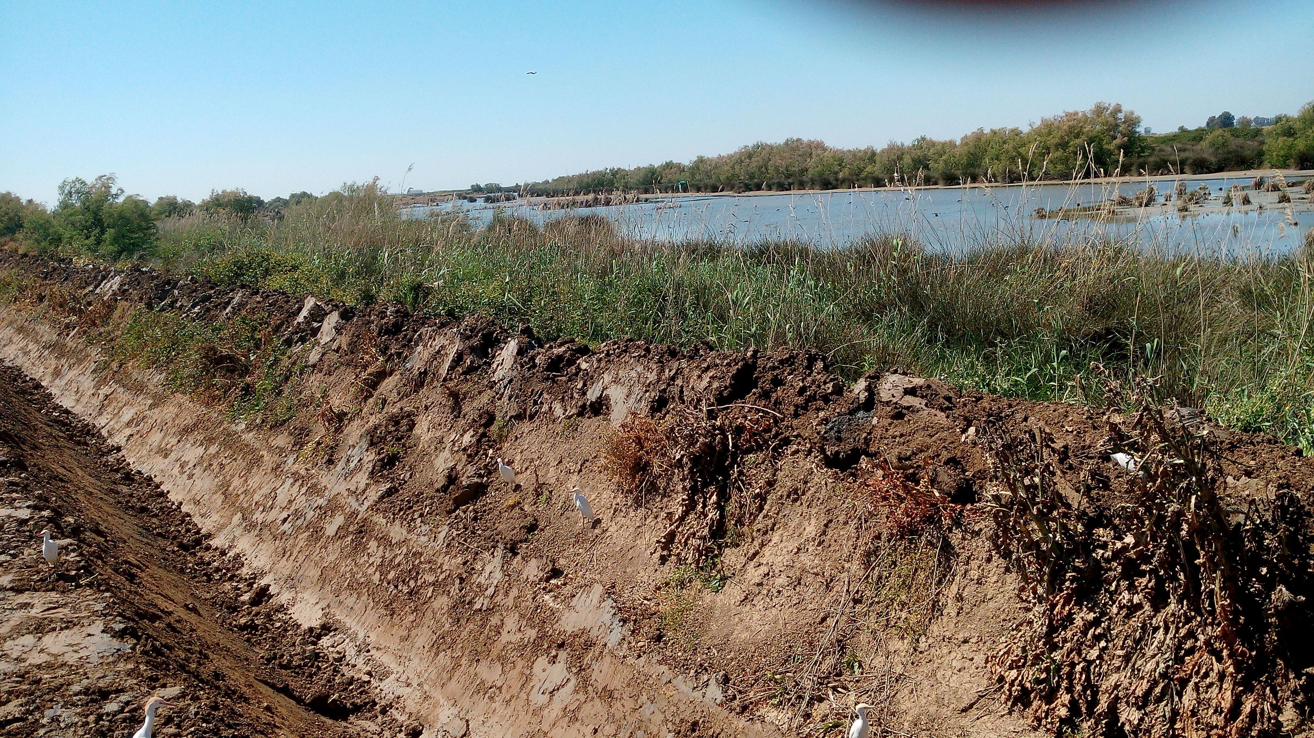 Foto 31 de Excavaciones y movimientos de tierra en Los Palacios y Villafranca | Hermanos Palacios Rincón