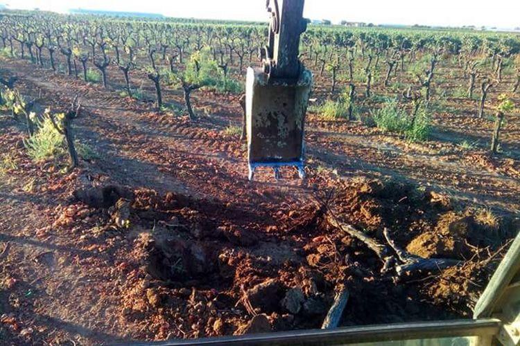 Arrancamos todo tipo de arboleda: naranjos, olivos, viñas, árboles frutales