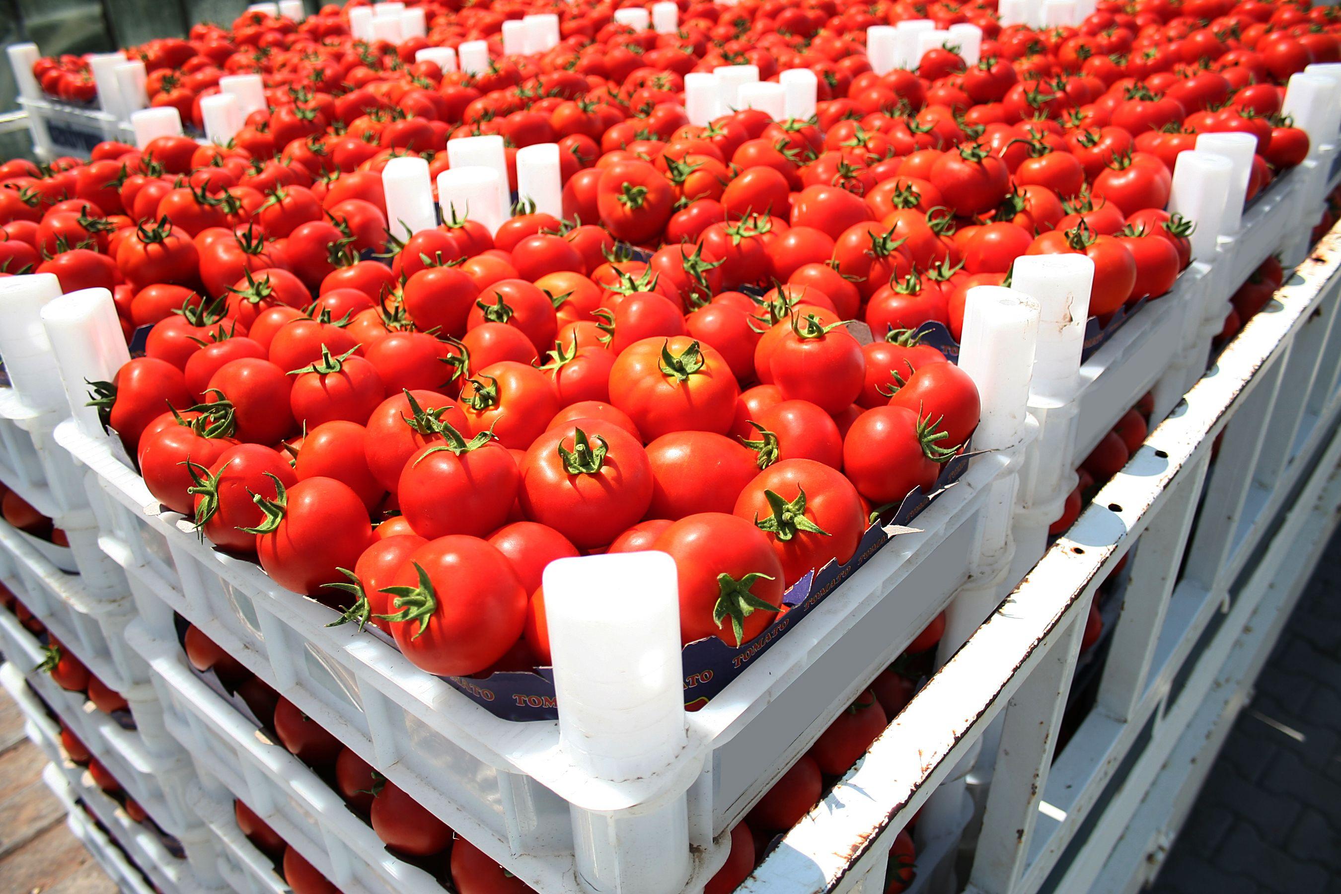 Los tomates más vistosos