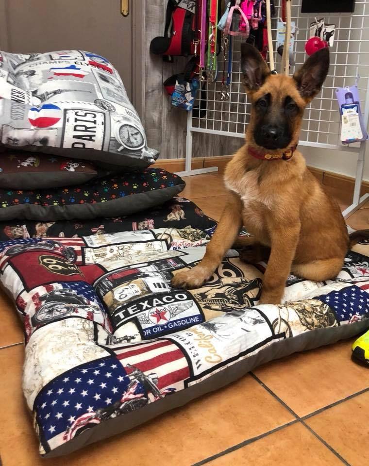 Accesorios y juguetes para perros en Tres Cantos