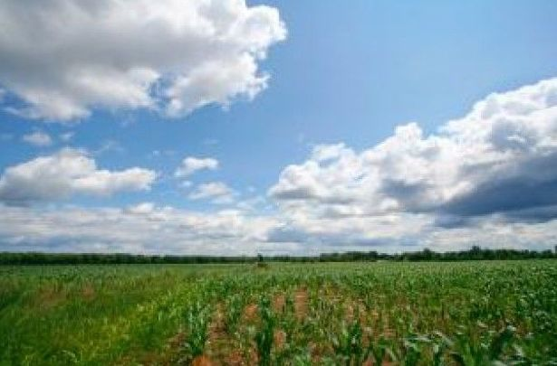 Asesoramiento técnico agrícola: Productos de Fitodel, S.L.