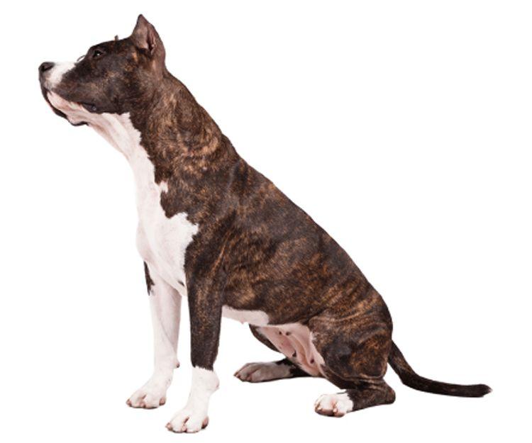 Certificado psicotécnico para permiso de perros potencialmente peligrosos