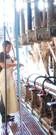Foto 5 de Productos lácteos en Nueva Jarilla | Lácteos Artesanía