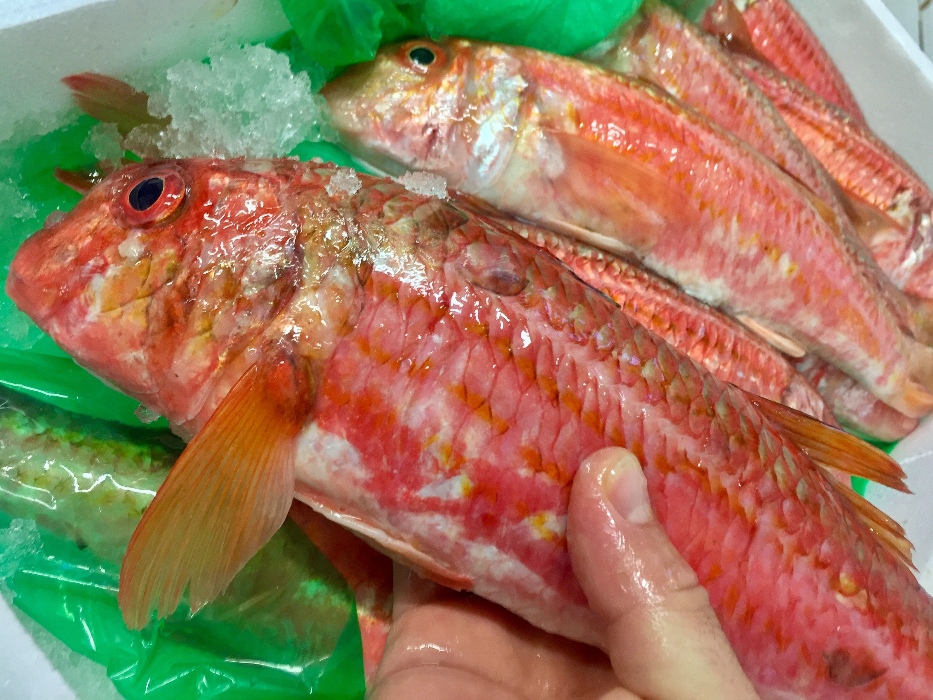 Foto 17 de Distribución de pescados y mariscos frescos y congelados en Madrid | Dispemar Celada