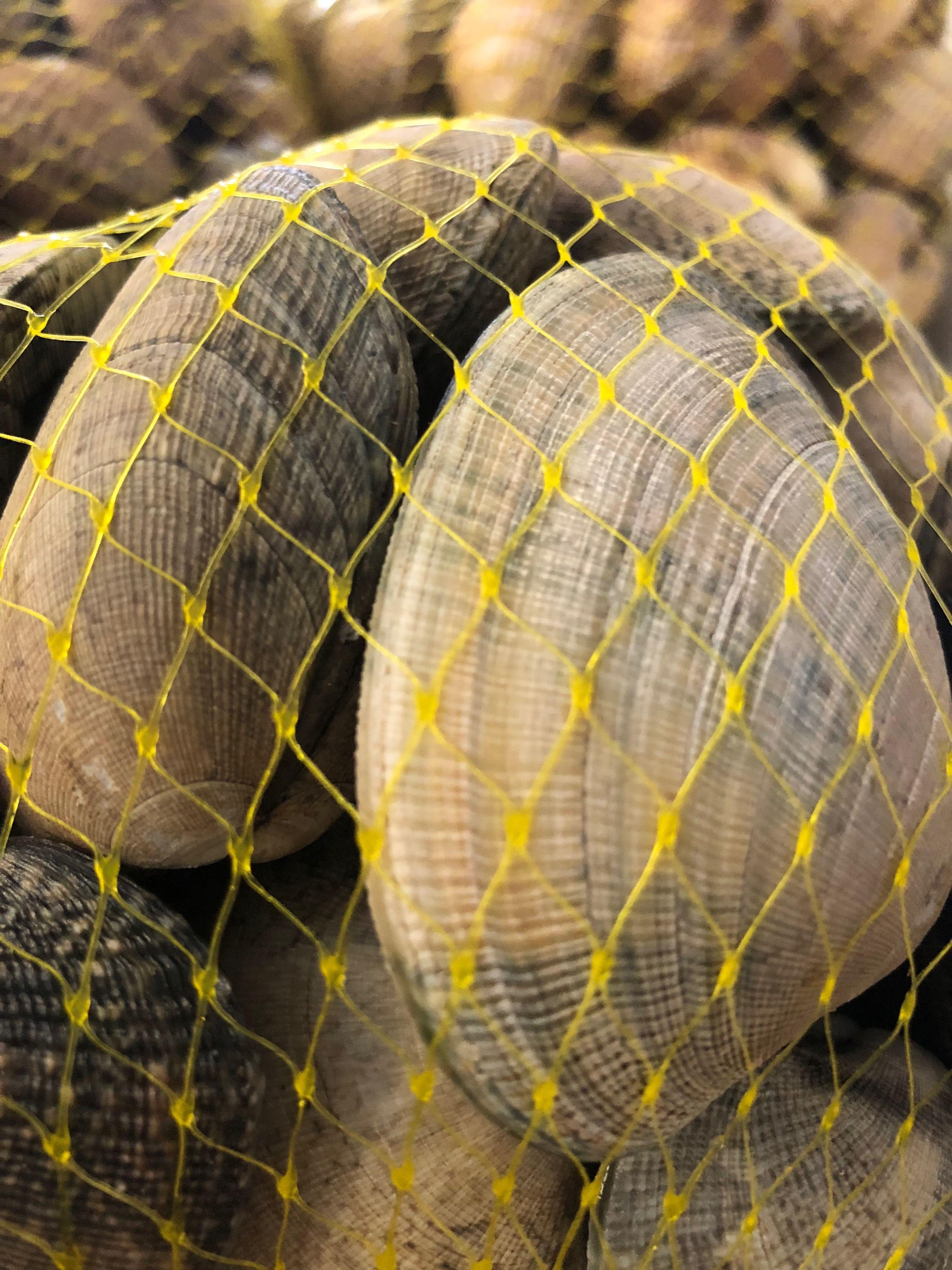 Foto 24 de Distribución de pescados y mariscos frescos y congelados en Madrid | Dispemar Celada