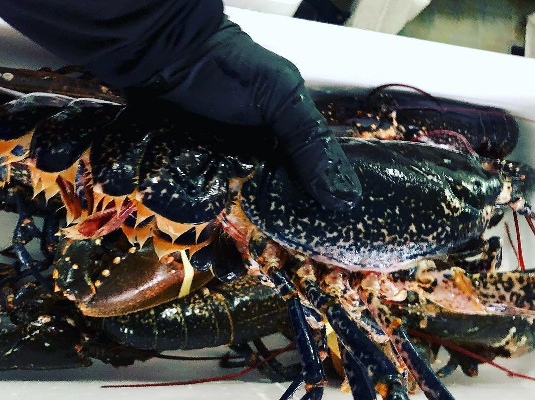 Foto 4 de Distribución de pescados y mariscos frescos y congelados en Madrid | Dispemar Celada