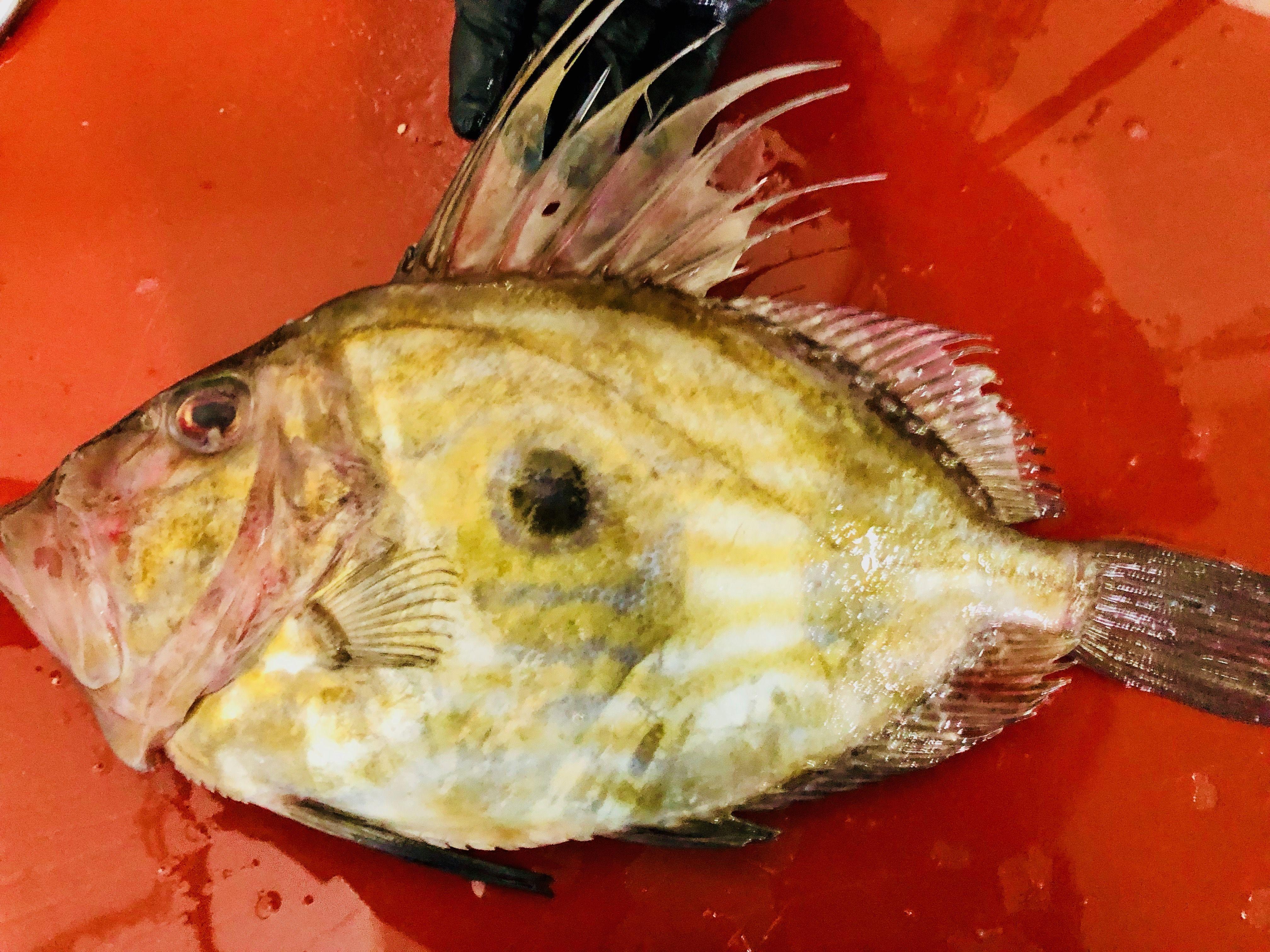 Foto 1 de Distribución de pescados y mariscos frescos y congelados en Madrid | Dispemar Celada