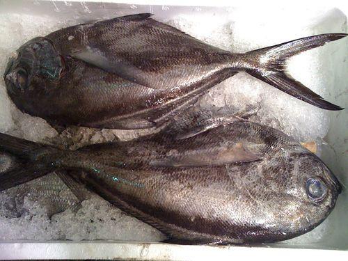 Pescados frescos: Nuestros productos y servicios de Dispemar Celada