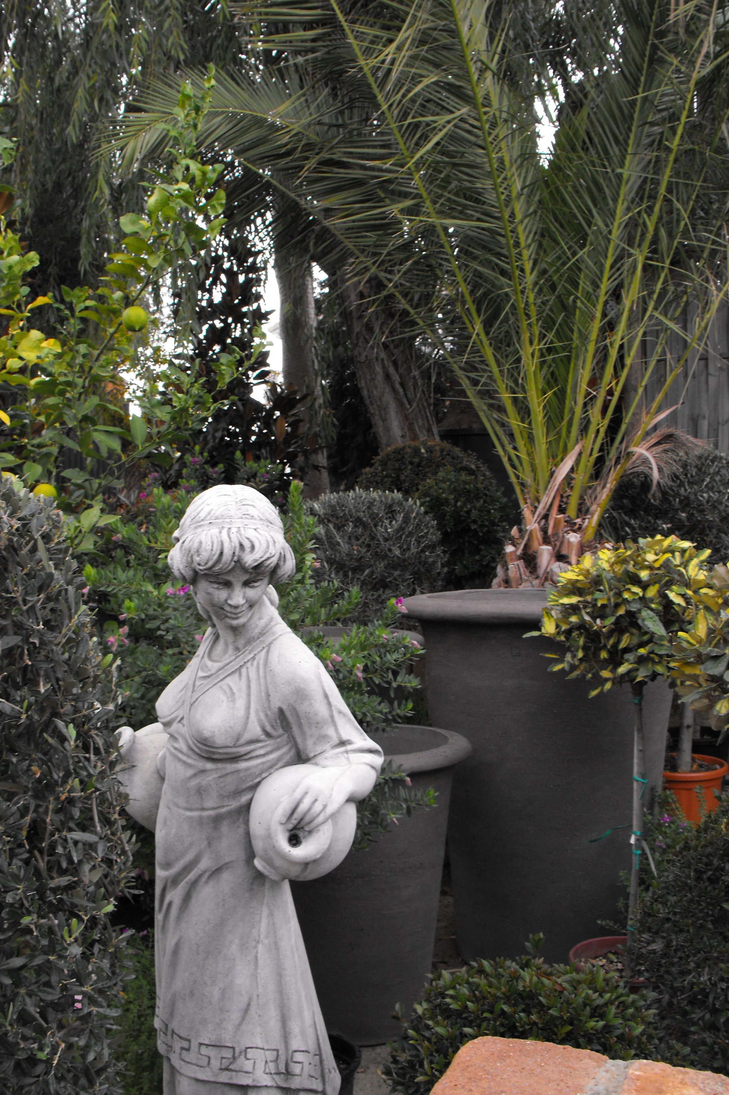 Foto 8 de Viveros de jardinería en Marbella | Viveros González