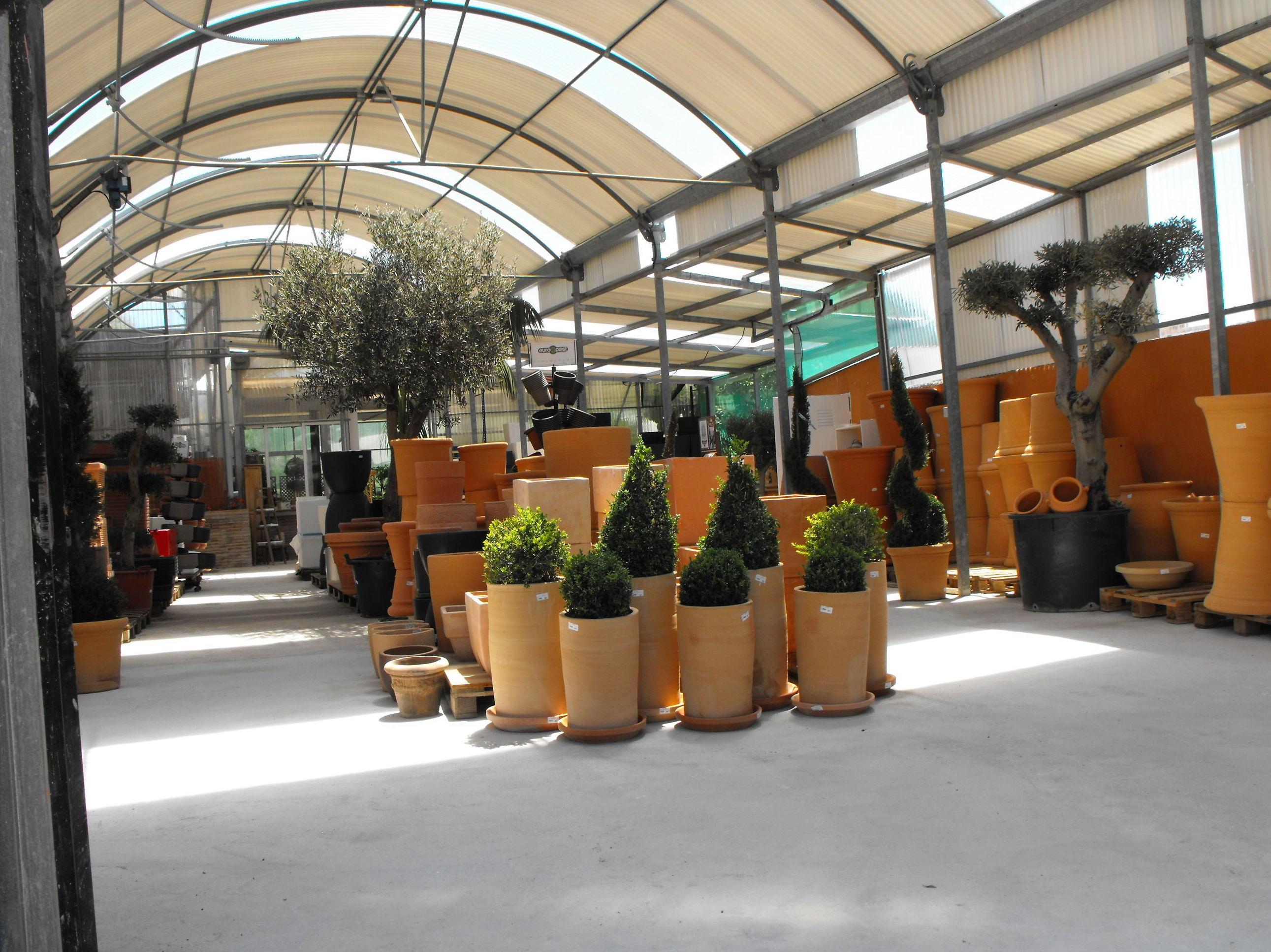 Foto 13 de Viveros de jardinería en Marbella | Viveros González