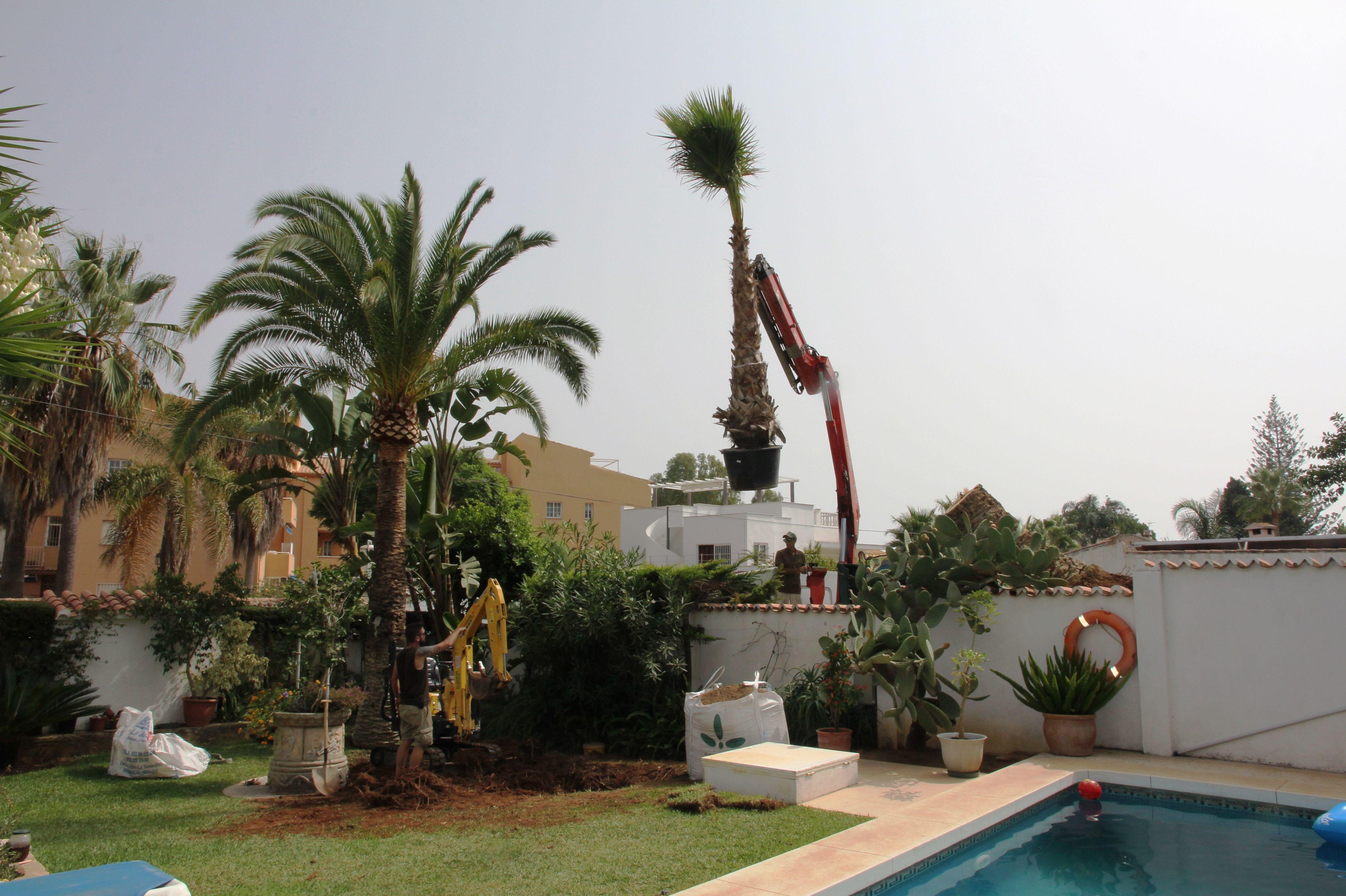 Foto 22 de Viveros de jardinería en Marbella | Viveros González