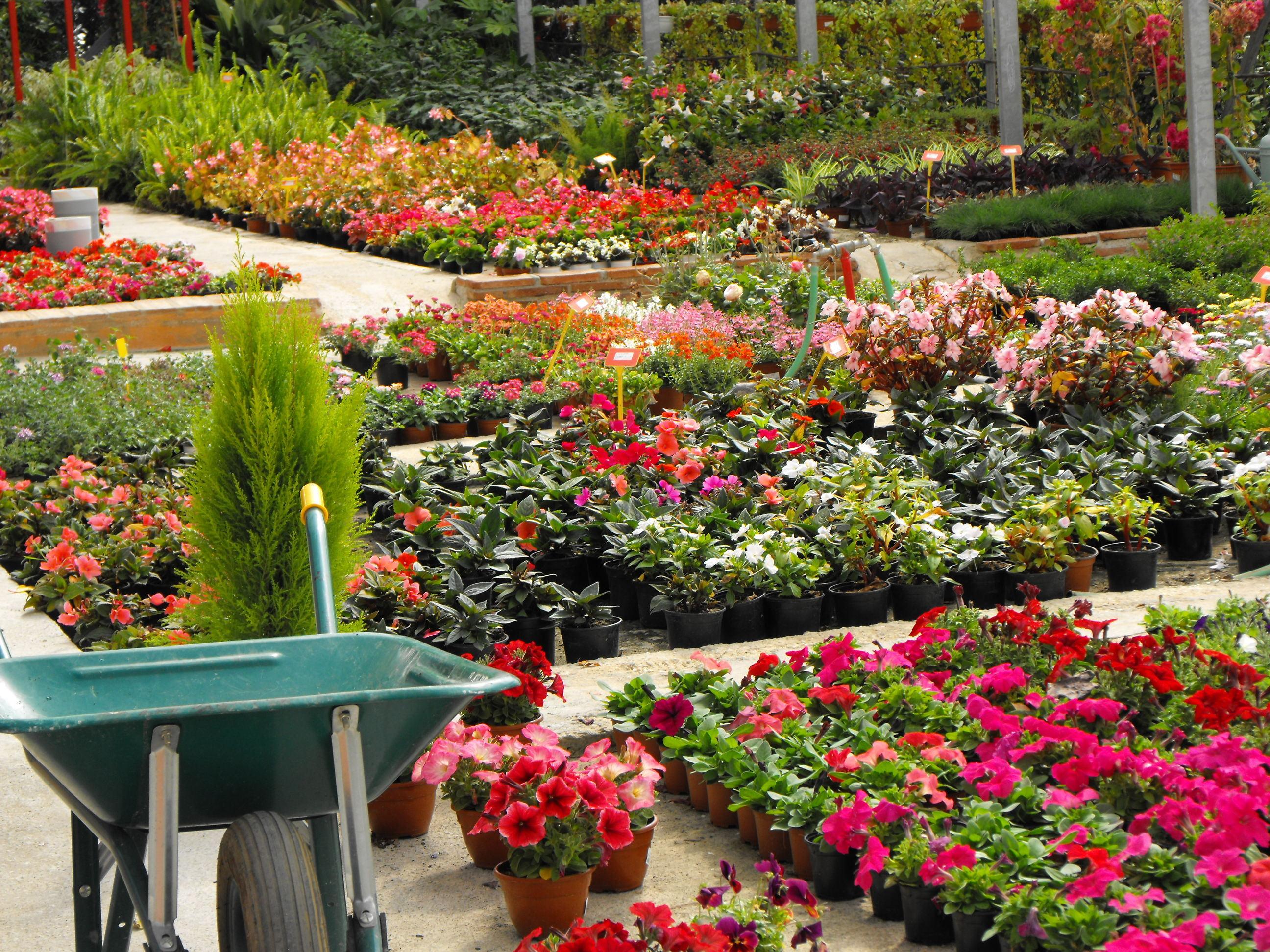 Foto 12 de Viveros de jardinería en Marbella | Viveros González