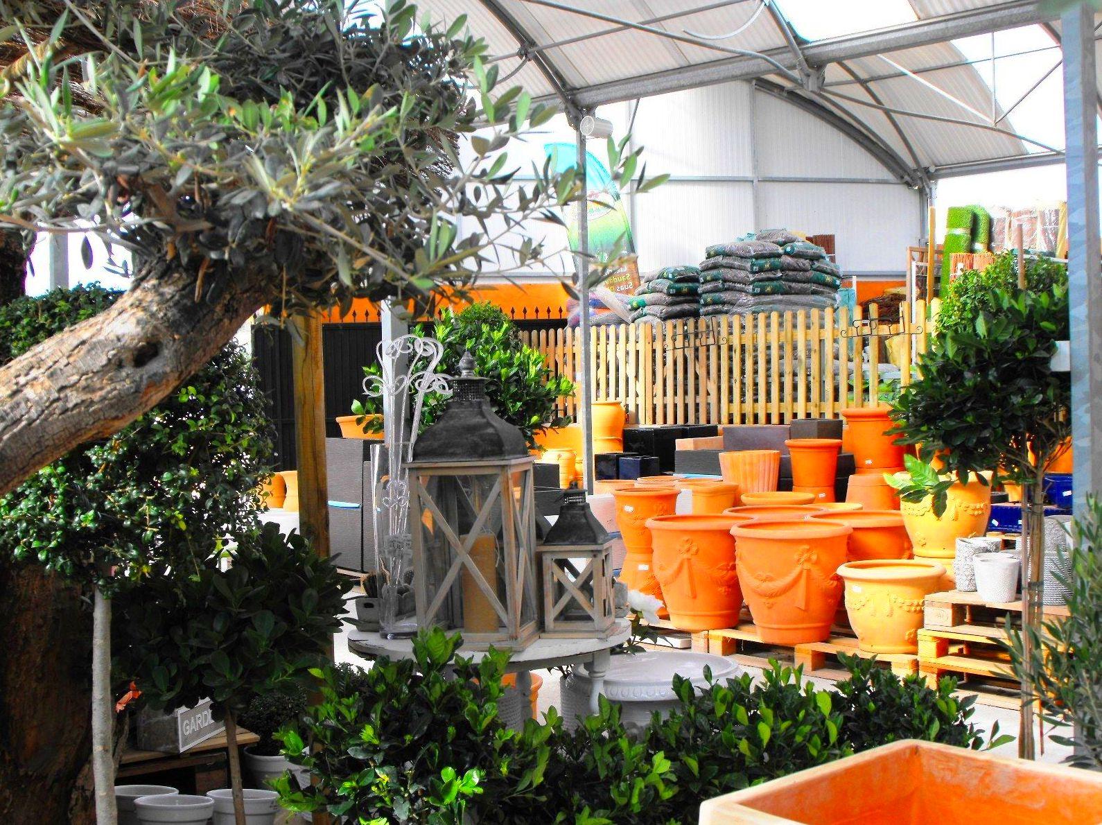 Foto 26 de Viveros de jardinería en Marbella | Viveros González