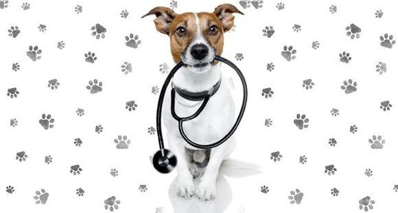 Clínica veterinaria Collado Villalba