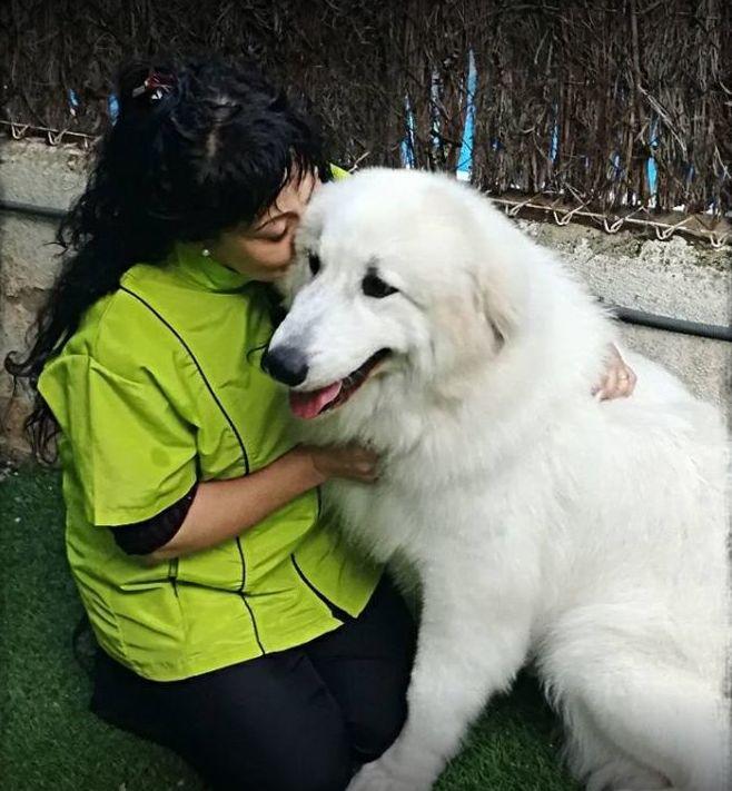 Foto 2 de Peluquerías caninas en Caldes de Montbui | Animals Ca la Ruth