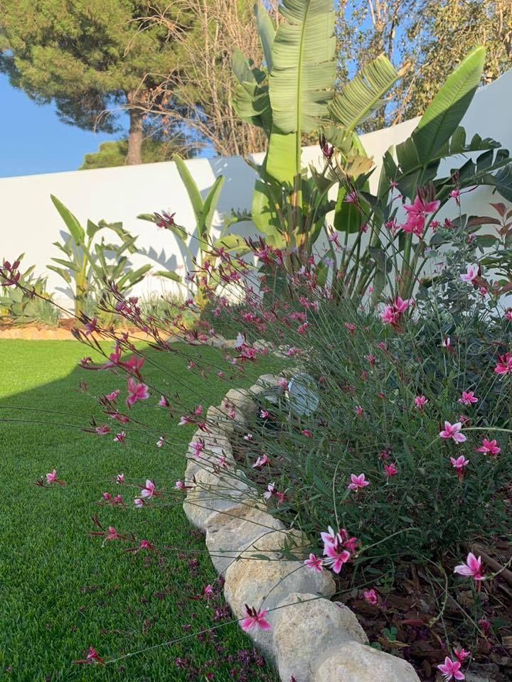 Colocación de plantas naturales en Huelva