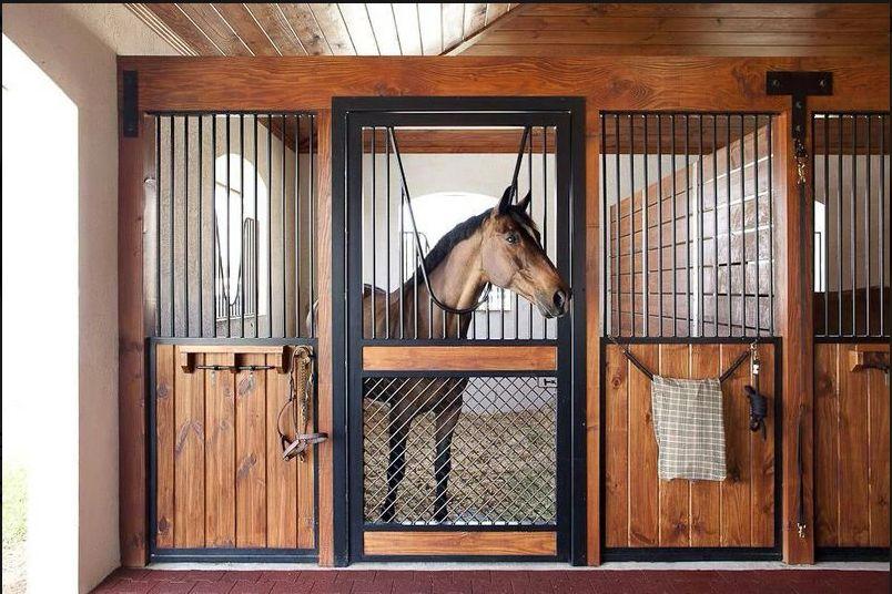 Máximos cuidados para caballos en Girona