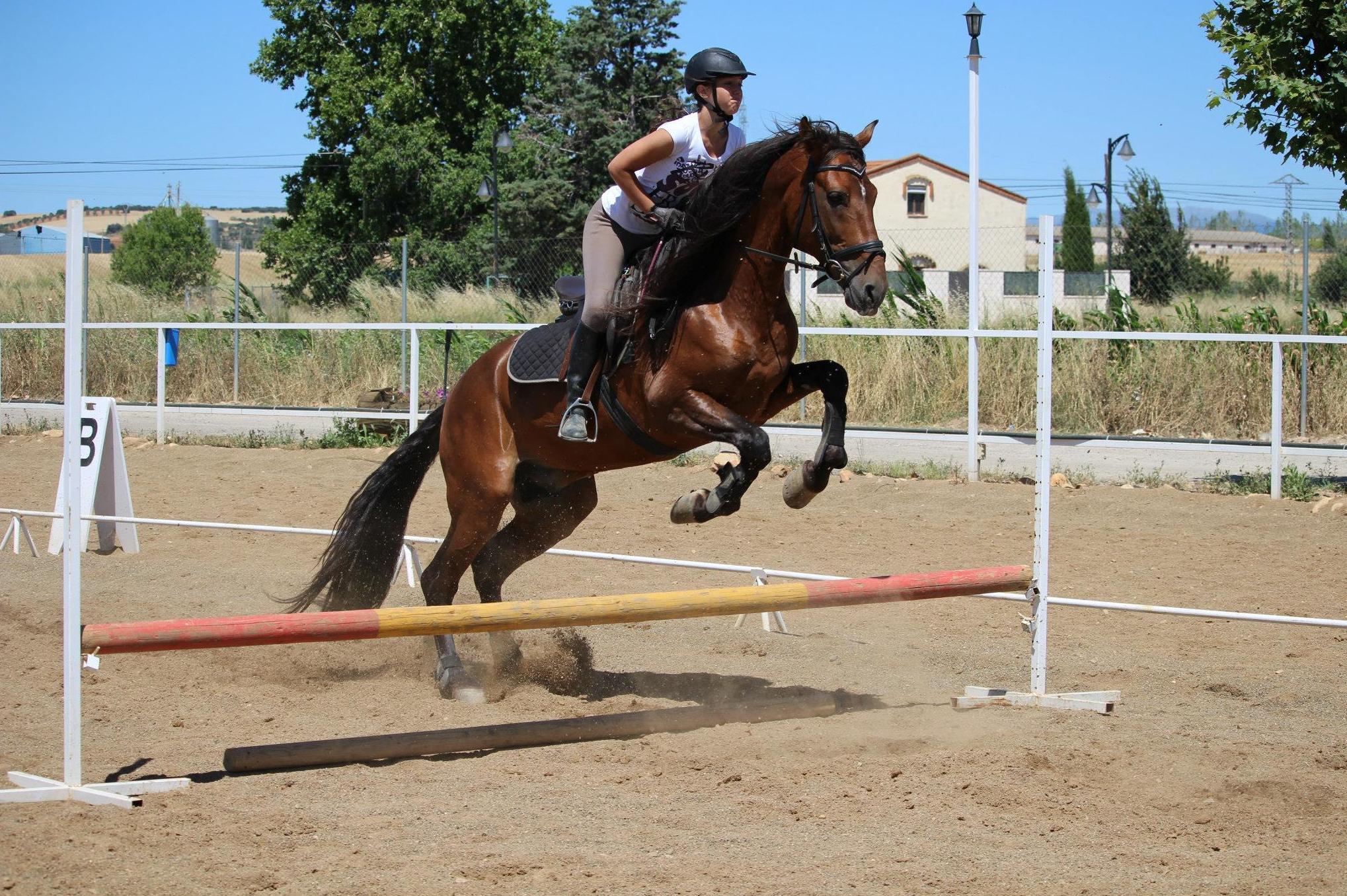 Clases de salto con caballo en Yunquera de Henares, Guadalajara