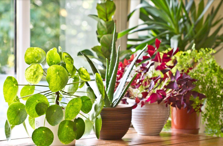 Flores y plantas frescas Corralejo