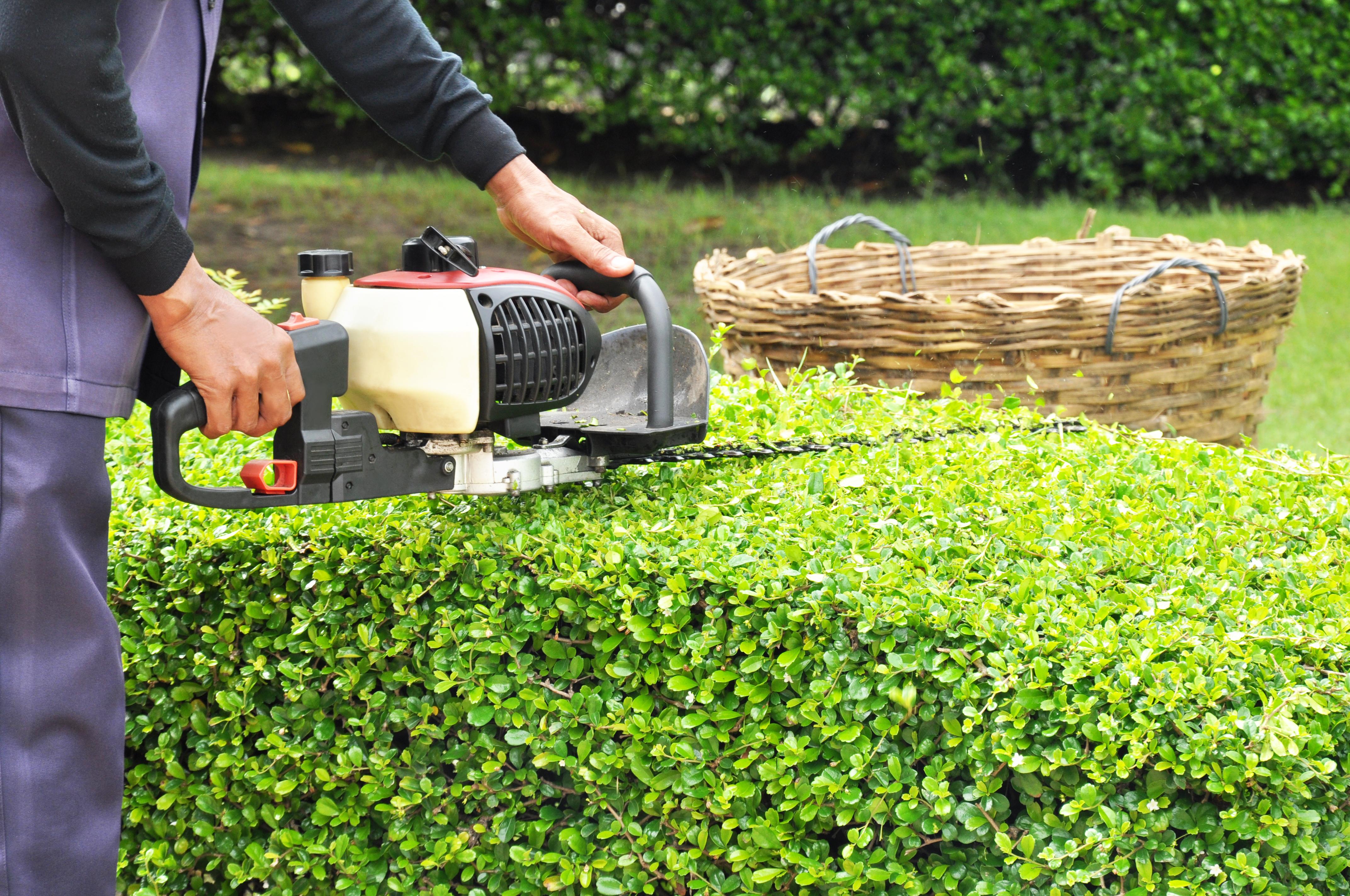 Mantenimiento de jardinería: Servicios de GRUPO SERLIMAN