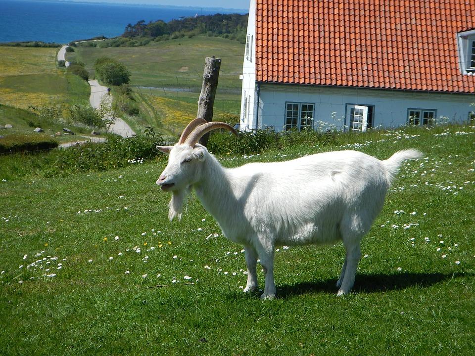 Leche de cabra: Productos de Lácteas Cobreros