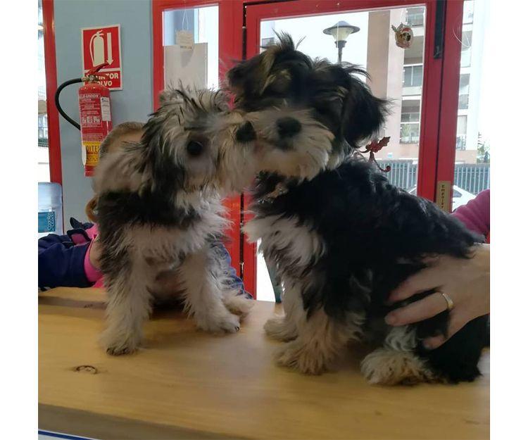 Vacunas para perros