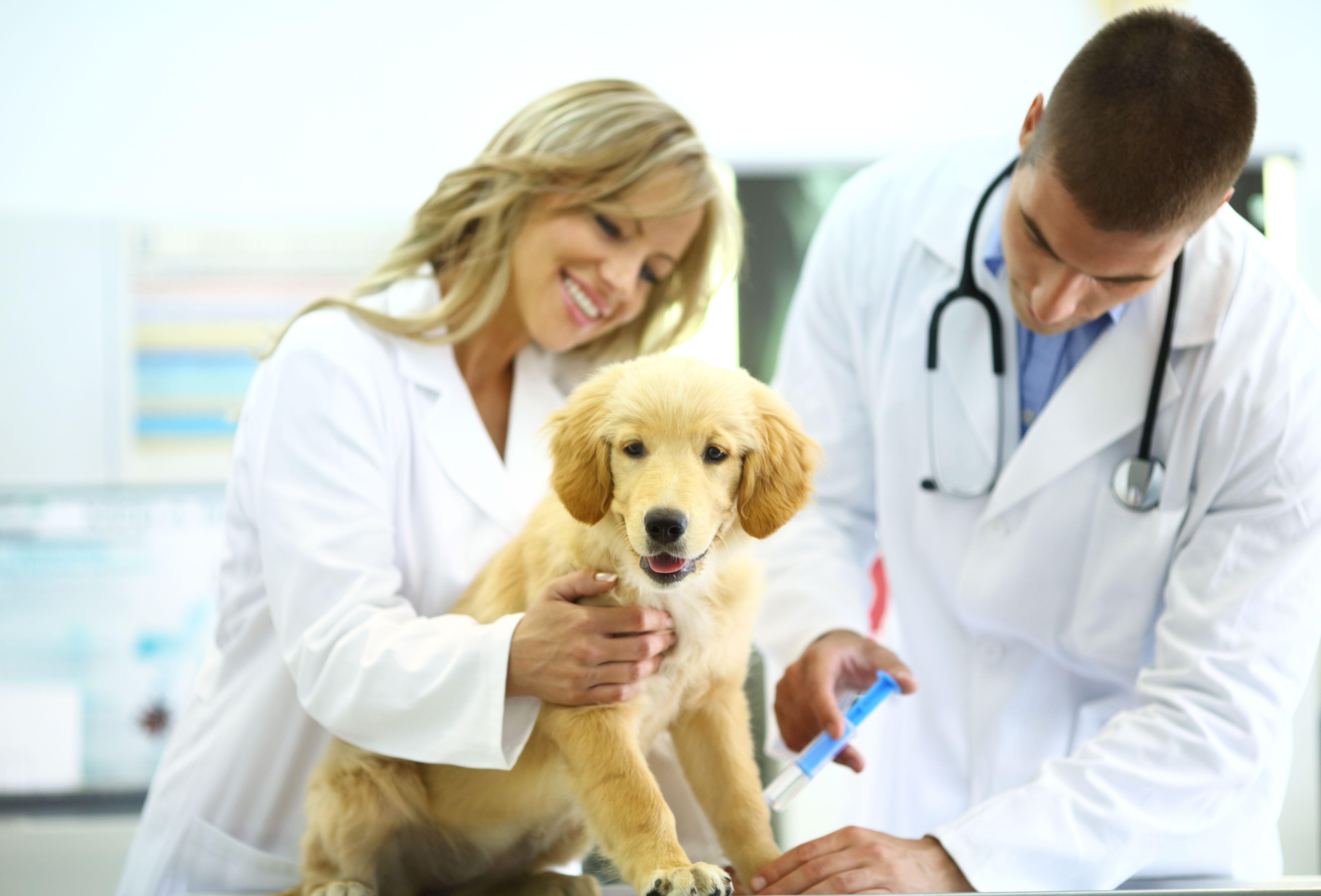 Medicina preventiva: Servicios de Clínica Veterinaria Vetsur Fuengirola