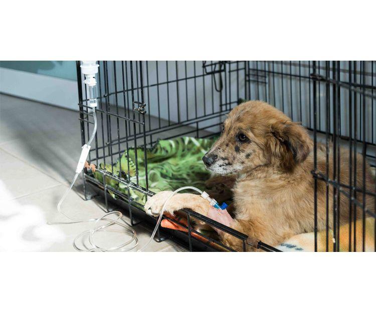 Hospitalización de mascotas