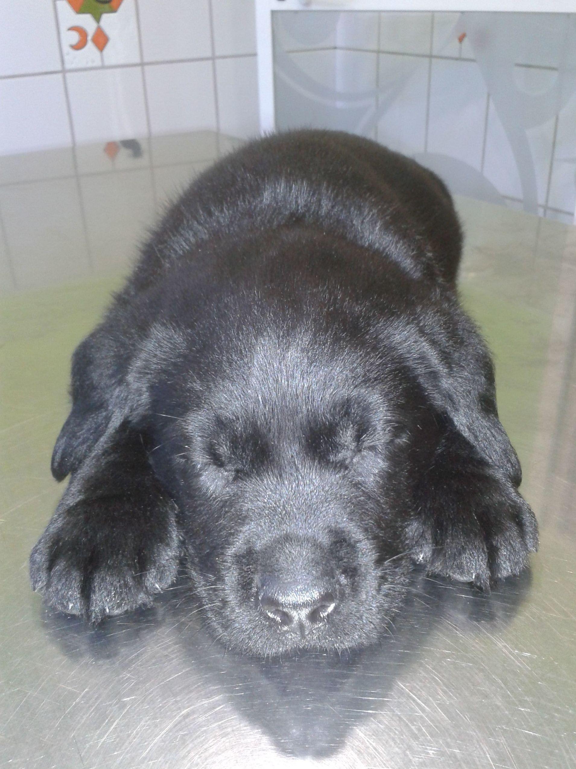 Vacunas para perros en Torremolinos