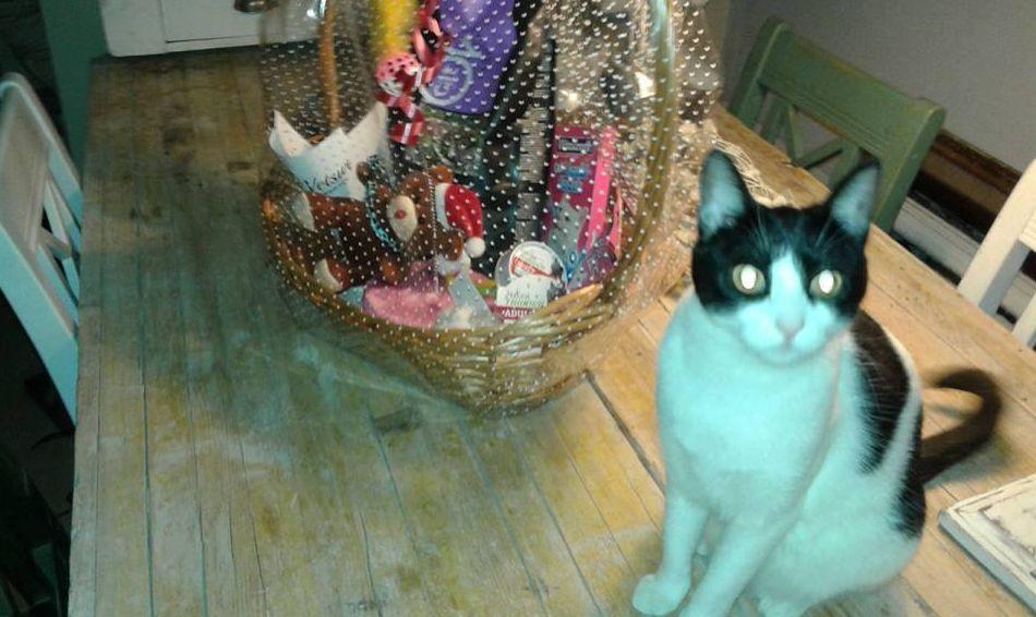 Clínica veterinaria para gatos en Torremolinos