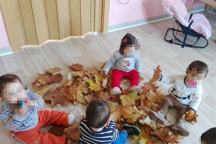 Las hojas de los árboles para jugar