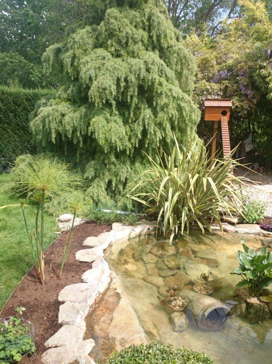Centros de jardineria en madrid fabulous os cuento quera for Centros de jardineria en madrid