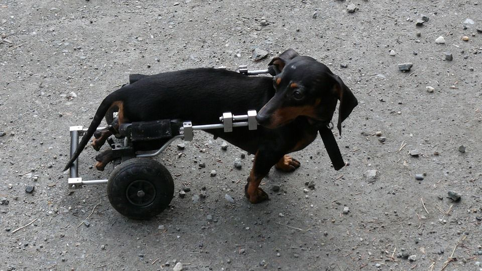 Campaña animales artrósicos: Servicios y Campañas de Clínica Veterinaria Benicalap