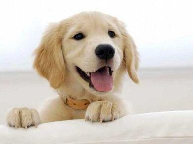 Vacuna contra la leishmaniosis canina Letifend