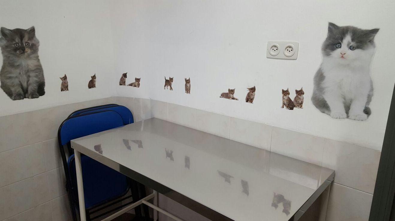 Consulta Gatos Clínica Veterinaria Benicalap